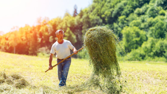Farmer with a pitchfork collecting hay