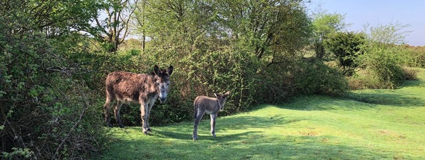 Watch out for foals and baby donkeys in the New Forest