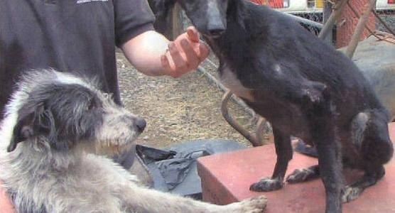 Dogs at Redgate Farm Animal Sanctuary
