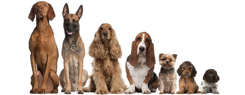 Psychology of Dogs Body Language