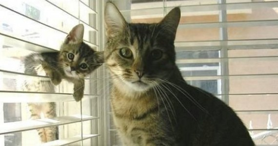 Cat Indoors