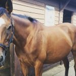 Nevern Melody the Thoroughbred