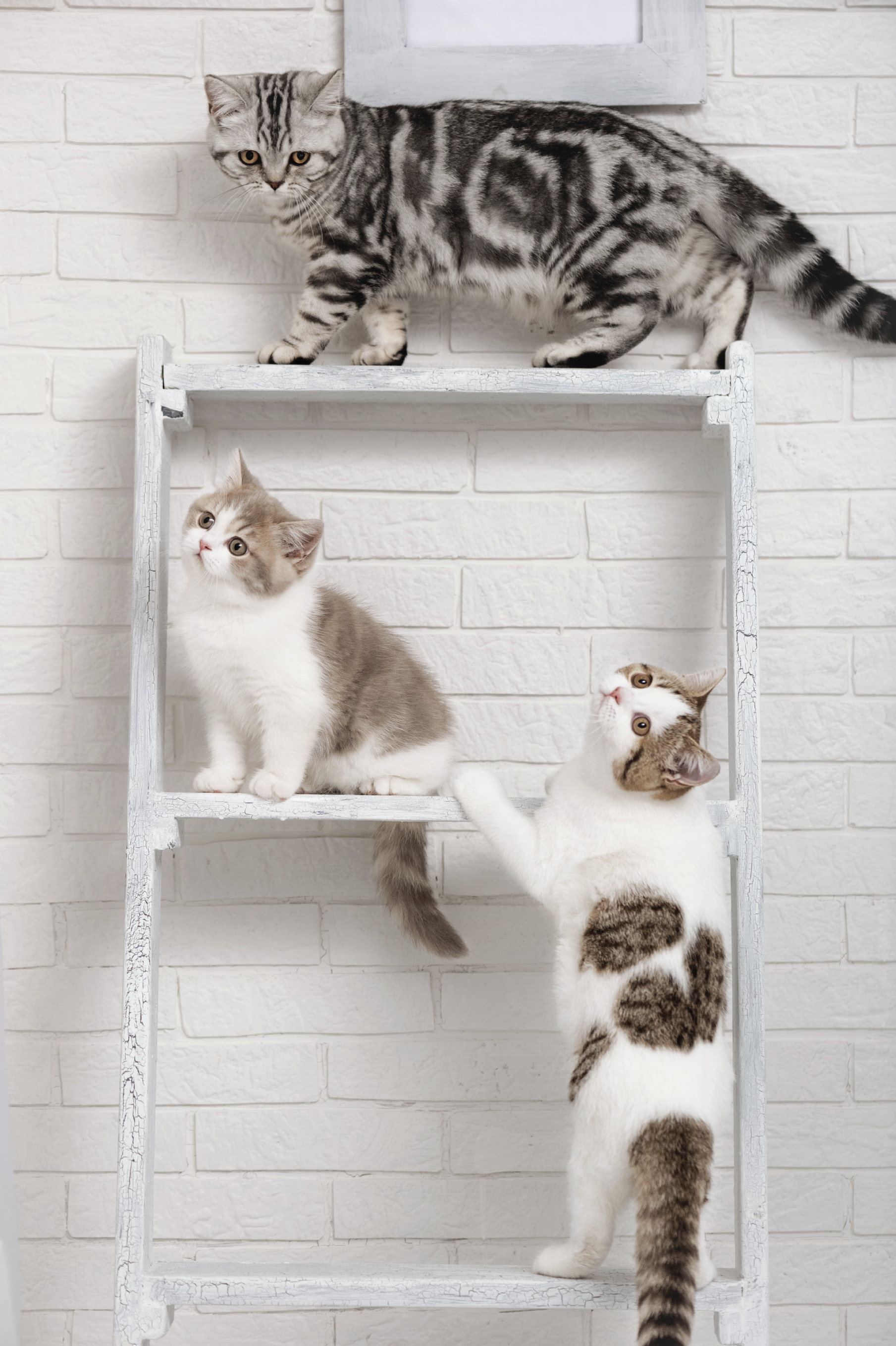 How To Keep Cats Off Shelves