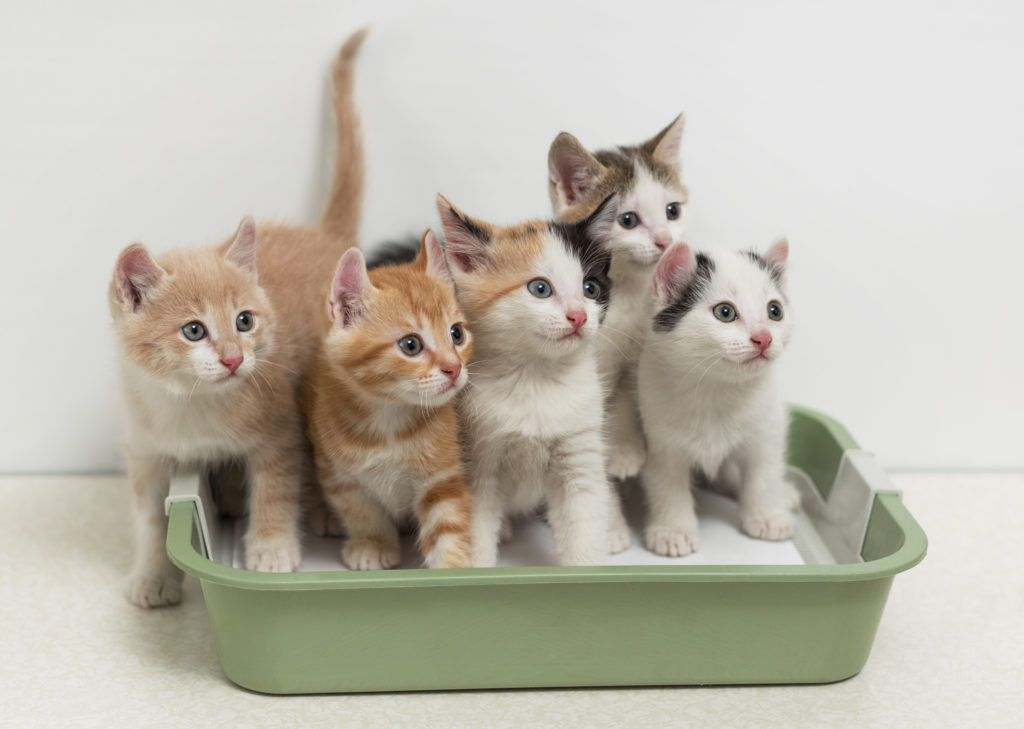 Kittens in litter tray