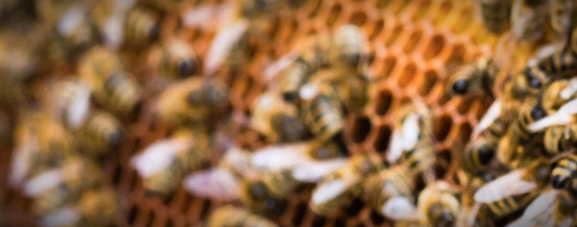 Bees-Header
