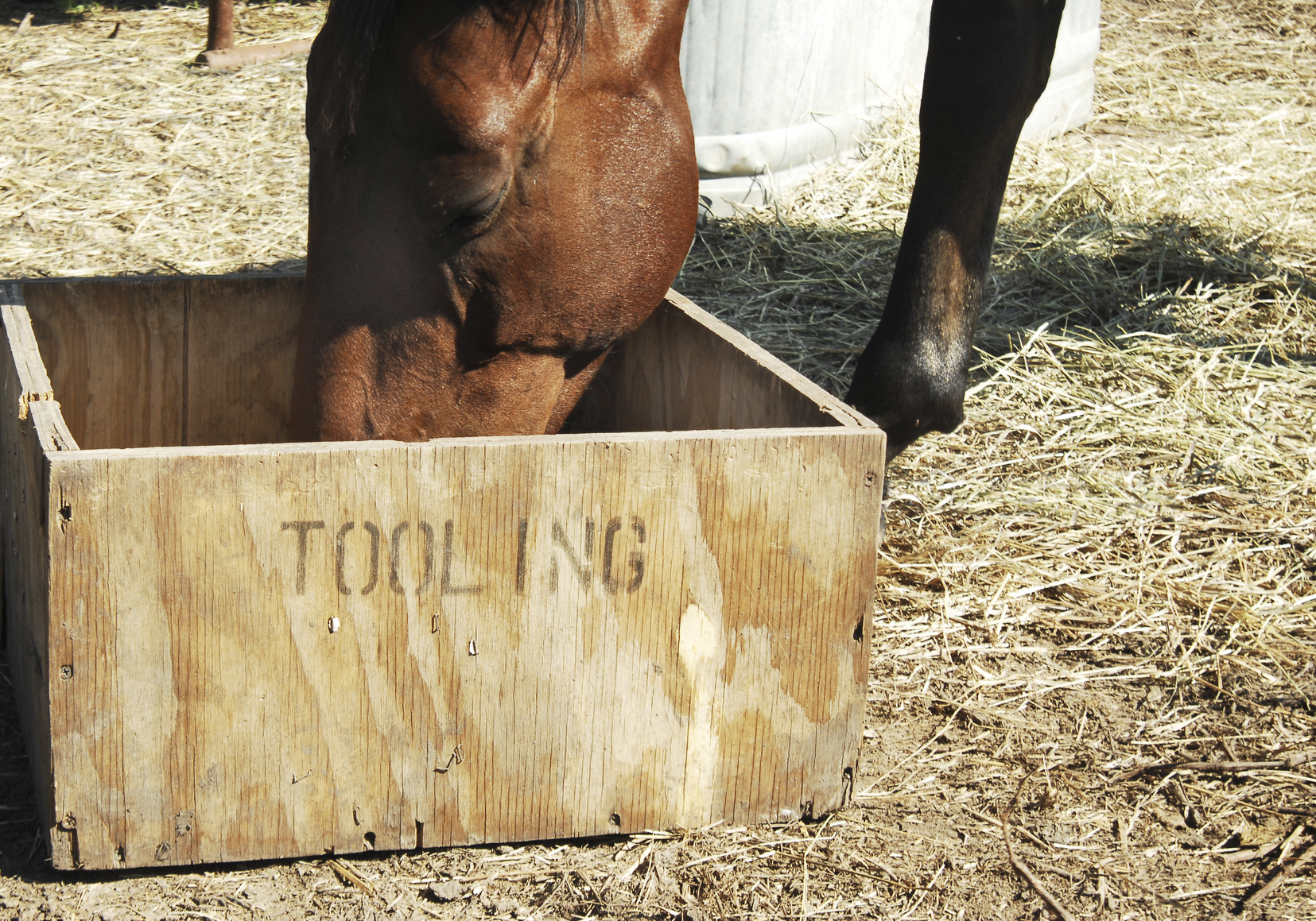 Why Does My Horse Chew Wood?