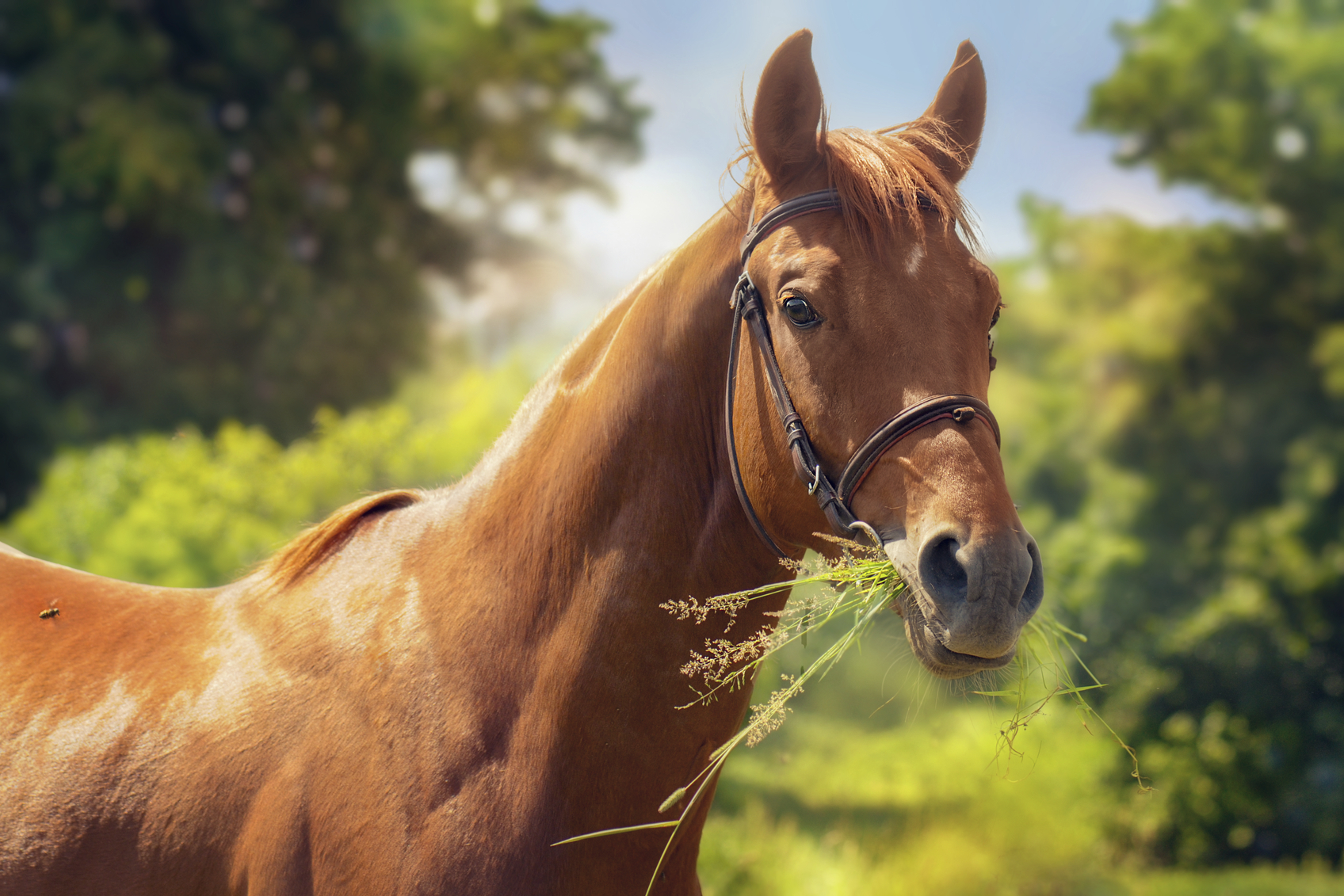 Art portrait of chestnut horse.