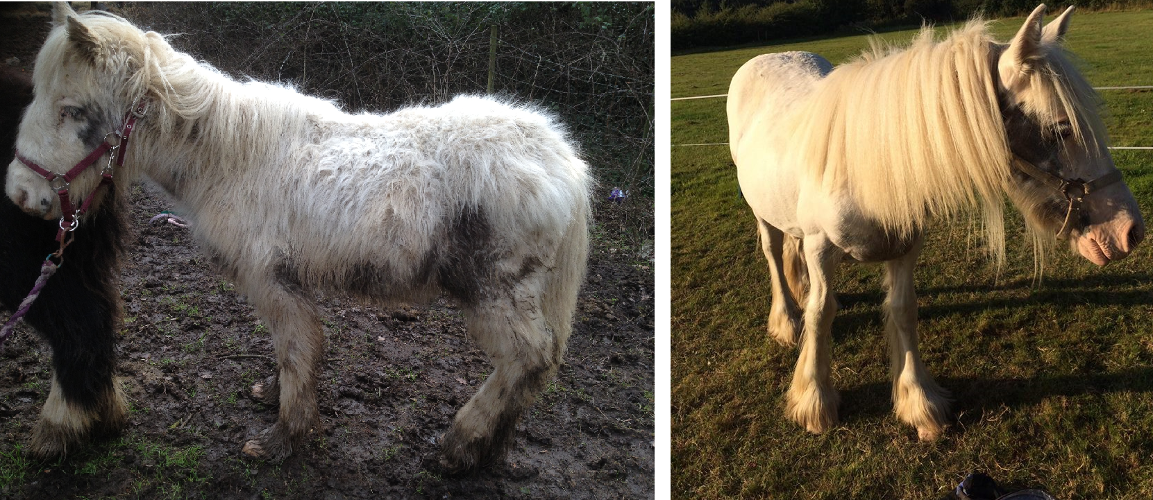 before-and-after-pukka