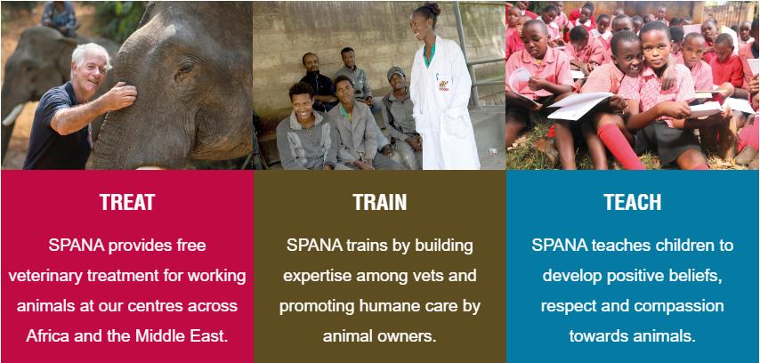 spana-graphic