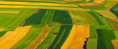 Une agriculture pour nourrir les Hommes > Schémas - cours en