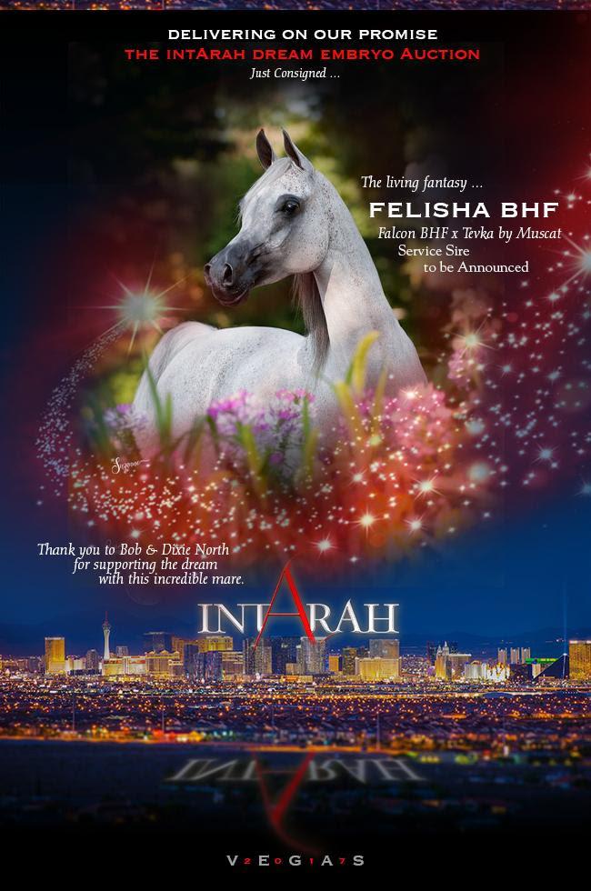 IntArah Dream ... Felisha BHF