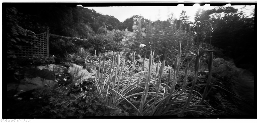 Iris, Cottage Garden - Pin Hole Photography, Ilford FP4, f/158 @ 4 seconds (ish)