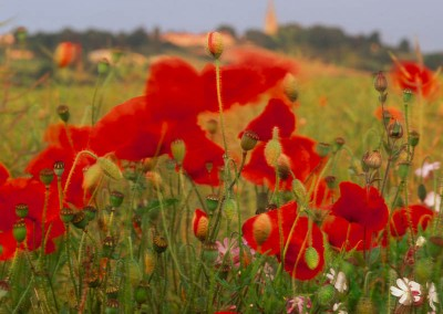 Slade Hooton Poppies