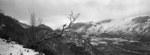 Black and White panoramic picture of a tree