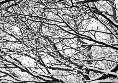 Brincliffe Edge  Woods 1