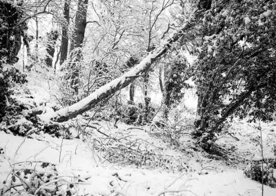 Brincliffe Edge Woods 2