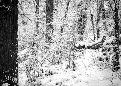 Brincliffe Edge Woods 3