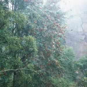 Bole Hill Tree Trees in Autumn, Peak District