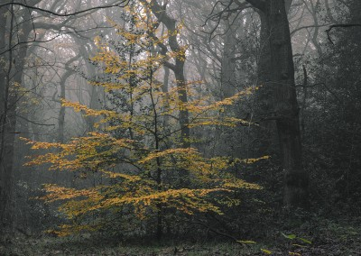 Ecclesall Woods, Autumn