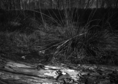 Grass near Gardoms Standing Stone