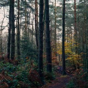 Path, Lady Canning's Plantation, Sheffield
