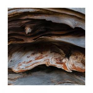 Scot Pine Roots