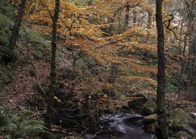Padley Gorge in Autumn, Peak District