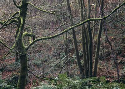 Padley Gorge14