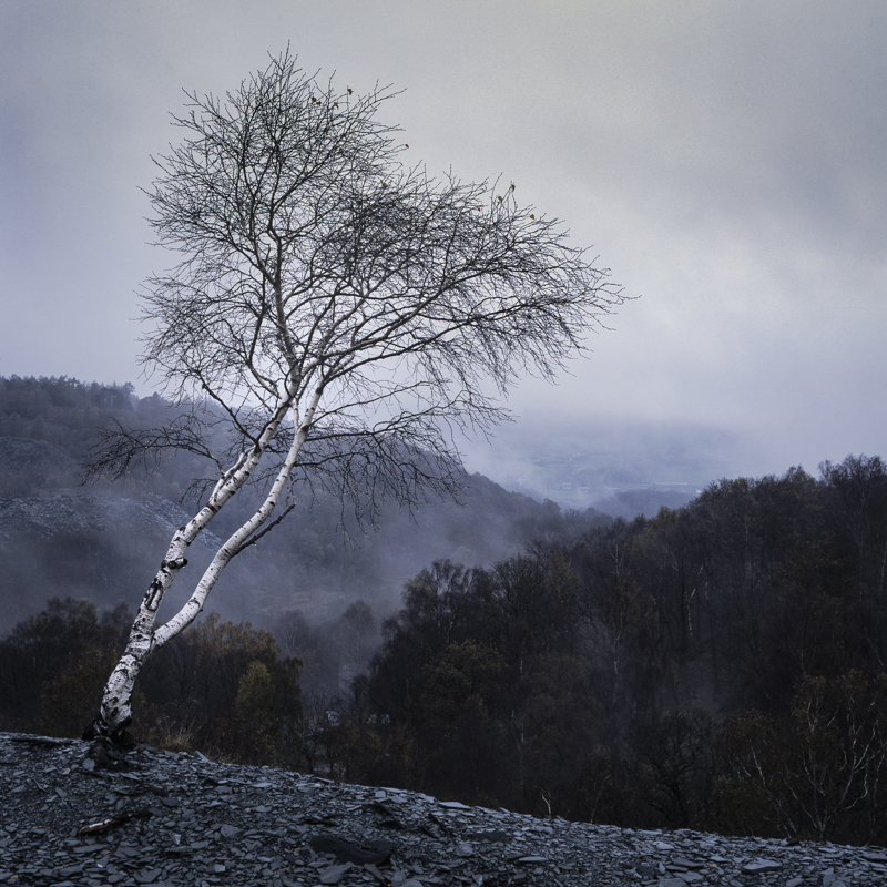 Hodge Close Tree taken by Alastair Ross Photography in the Lake District