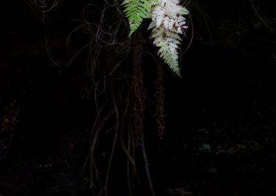 White Fern, Eskdale, Weatern Lakes