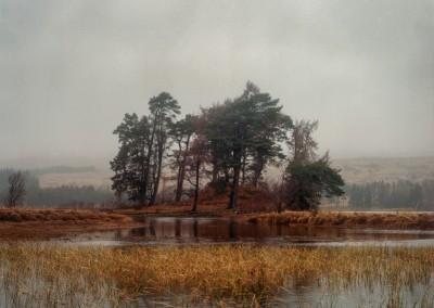 Scots Pine, Loch Tulla, Scotland