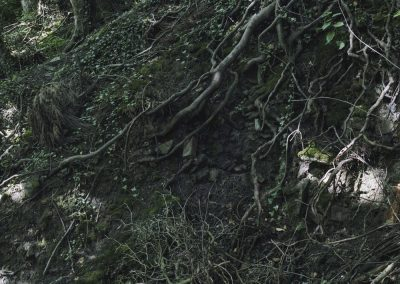 Drain and Roots, Limb Brook, Sheffield