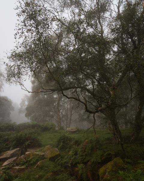 Millstone and Birch, Bolehill Quarry, Peak District, peak district landscape photography