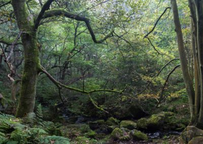 Autumn is Coming, Padley Gorge, Peak District