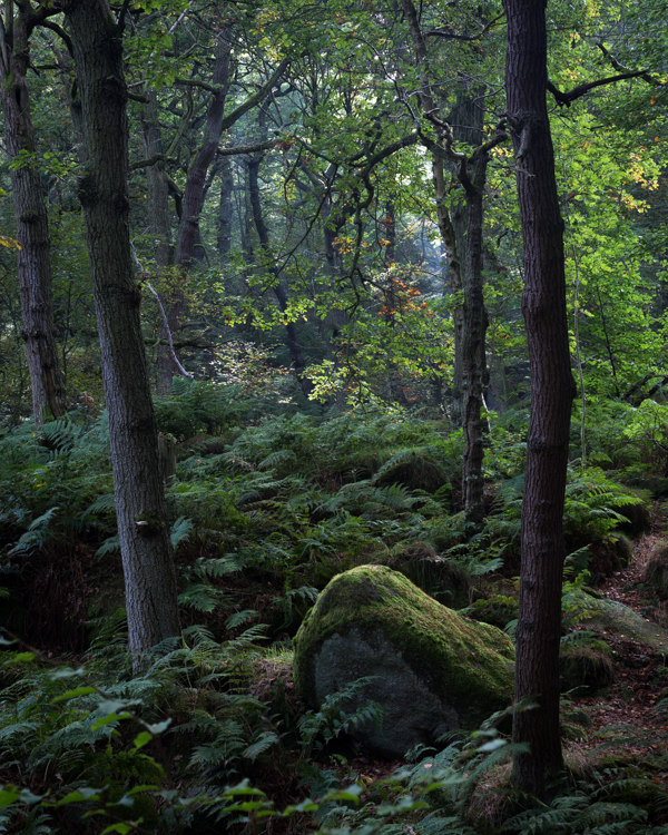 Autumn is Coming, Padley Gorge, Peak District, peak district photographer