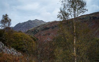 Kepple Crag, Birch and Mountain Ash, Eskdale