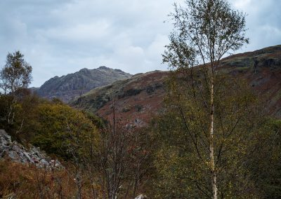 Kepple Crag, Birch and Mountain Ash