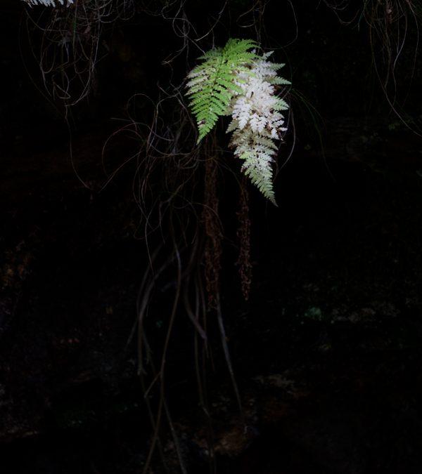 White Fern, Eskdale, Western Lakes