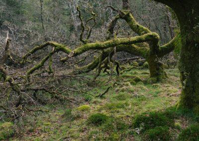Ariundle Woods III, Ardnamurchan