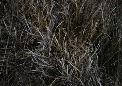Gardoms Edge Grasses, Peak District