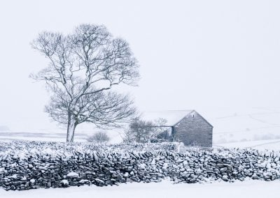 Tree and Barn, Peak District
