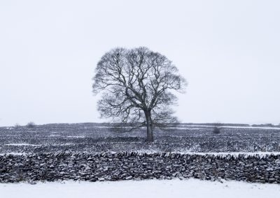 Tree, Litton, Peak District