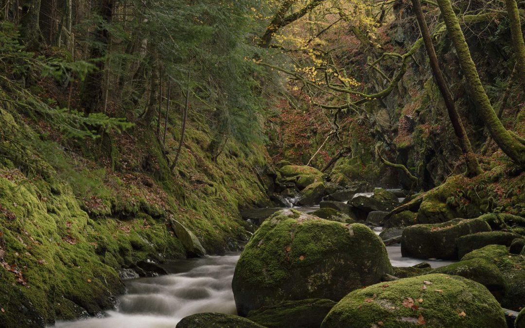 Sutherland's Grove, Argyll, Scotland