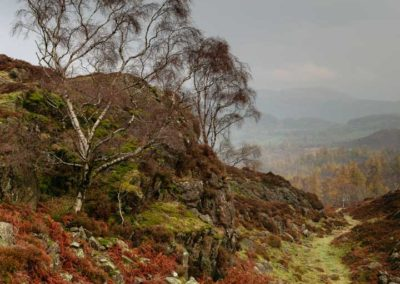 Back of Holme Fell, Lake DIstrict, Cumbria