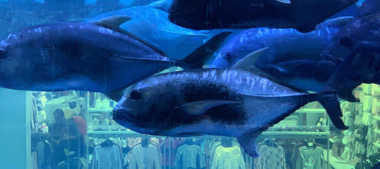 Public programme | The Dreamfish by Michela de Mattei