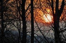Sunset through the Birch Trees - High Beech