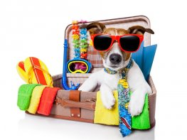 Top Tips for... Making the most of your holiday