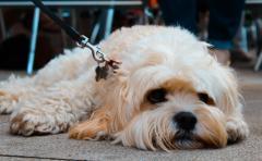 Dog Festival 1