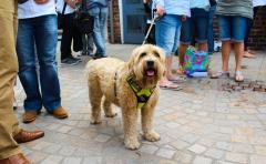 Dog Festival 10