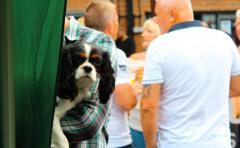 Dog Festival 11